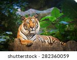 bengal tiger in forest show... | Shutterstock . vector #282360059