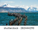 king cormorant colony  old dock ... | Shutterstock . vector #282444290