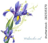 iris  painted watercolor on a... | Shutterstock .eps vector #282535370