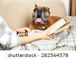 Cute Dog And Girl Lying On Sof...