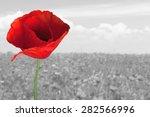 Poppy  Flower  Red.