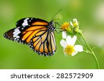 Stock photo closeup butterfly on flower common tiger butterfly 282572909