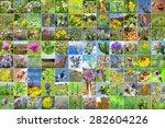 the wild growing plants of... | Shutterstock . vector #282604226