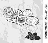 hand drawn decorative kiwi... | Shutterstock .eps vector #282604253