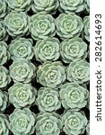 macro of succulent plant | Shutterstock . vector #282614693