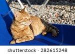 Big Proud Relaxing Cat On...