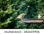Two Sparrows Bird Feeder Garde...