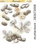 peanuts set of vector sketches... | Shutterstock .eps vector #282672008