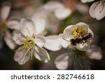 Garden Trees In Bloom Macro...