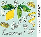 lemons drawing of a lemon ... | Shutterstock .eps vector #282855476