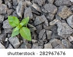 Green Plant Growing In Stone