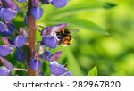 Flying  Bumblebee With A Purpl...
