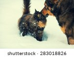 Stock photo dog and cat outdoors in snow 283018826
