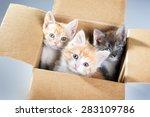 Stock photo little kittens in a cardboard box 283109786