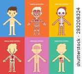 """my body""  educational anatomy... | Shutterstock .eps vector #283208324"