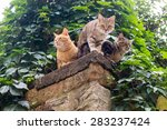 Three Cats Looking Down From A...