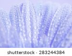 close up and selective focus of ... | Shutterstock . vector #283244384