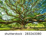 big tree  ten years old  is... | Shutterstock . vector #283263380