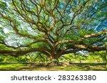Big Tree  Ten Years Old  Is...