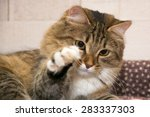 Stock photo cat resting cat on a sofa in colorful blur background cute funny cat close up young playful cat 283337303