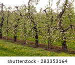 An Orchard With Fruit Trees  I...