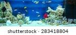 Large Rectangular Aquarium Wit...