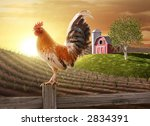 Rooster Perched Upon A Farm...