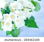 jasmine | Shutterstock . vector #283462100