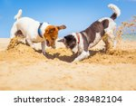 Jack Russell Couple Of Dogs...