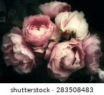 beautiful bouquet of pink rose... | Shutterstock . vector #283508483