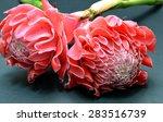 etlingera elatior or torch... | Shutterstock . vector #283516739