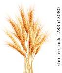 stalks of wheat ears. eps 10... | Shutterstock .eps vector #283518080