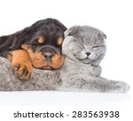 Cat And Rottweiler Puppy ...