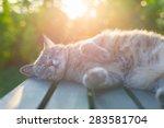 Playful Domestic Cat Lying On...