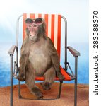Funny Monkey Relaxing On A ...
