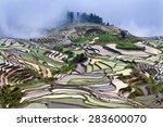 Terraced Rice Fields In Water...