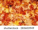 yellow  orange and red autumn... | Shutterstock . vector #283603949