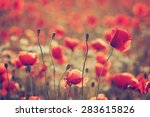 poppy field | Shutterstock . vector #283615826
