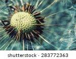 close up dandelion head in... | Shutterstock . vector #283772363