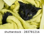 Stock photo cute black soggy cat after a bath in a yellow towel care of pets bathing kittens a little angry 283781216