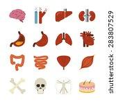 human organs vector... | Shutterstock .eps vector #283807529