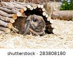 little rabbit hiding under a... | Shutterstock . vector #283808180