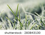 Frozen Morning Grass Close Up....