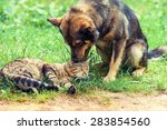 Stock photo dog and cat best friends playing together outdoor 283854560