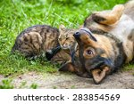 Stock photo dog and cat best friends playing together outdoor lying on the back together 283854569