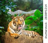 bengal tiger in forest show... | Shutterstock . vector #283891214