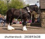 Shire Horse  'joseph' At The...