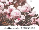 Stock photo original rosehip 283958198