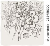 hand drawn vegetables graphic...