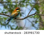 bee eater bird | Shutterstock . vector #283981730